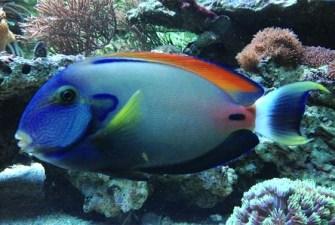 fowleri tang rotter tube reef