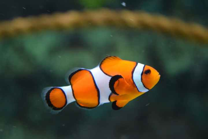 how to kill ich in a saltwater aquarium