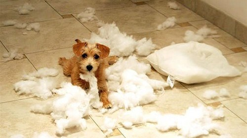 how to stop your puppy from chewing everything