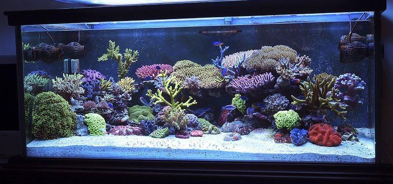 deep sand bed in marine aquarium